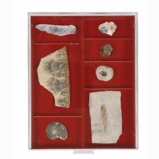 Münzenbox mit runden Vertiefungen Fachabmessung 105x280 (Lindner 2402)
